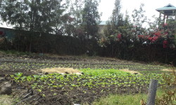 Property for sale in Kitengela with Borehole