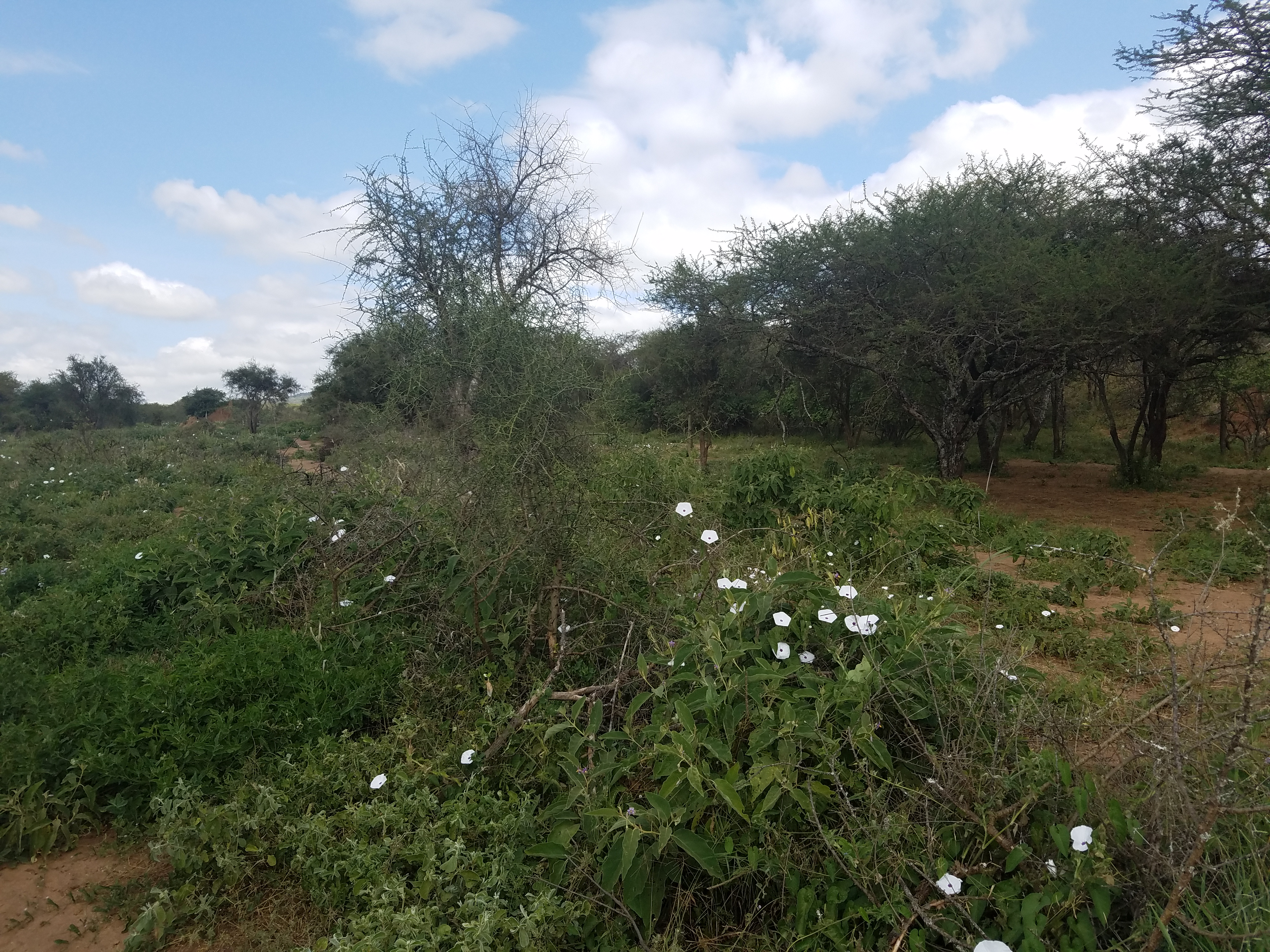 Agricultural Land for sale in Lorngosua Kajiado