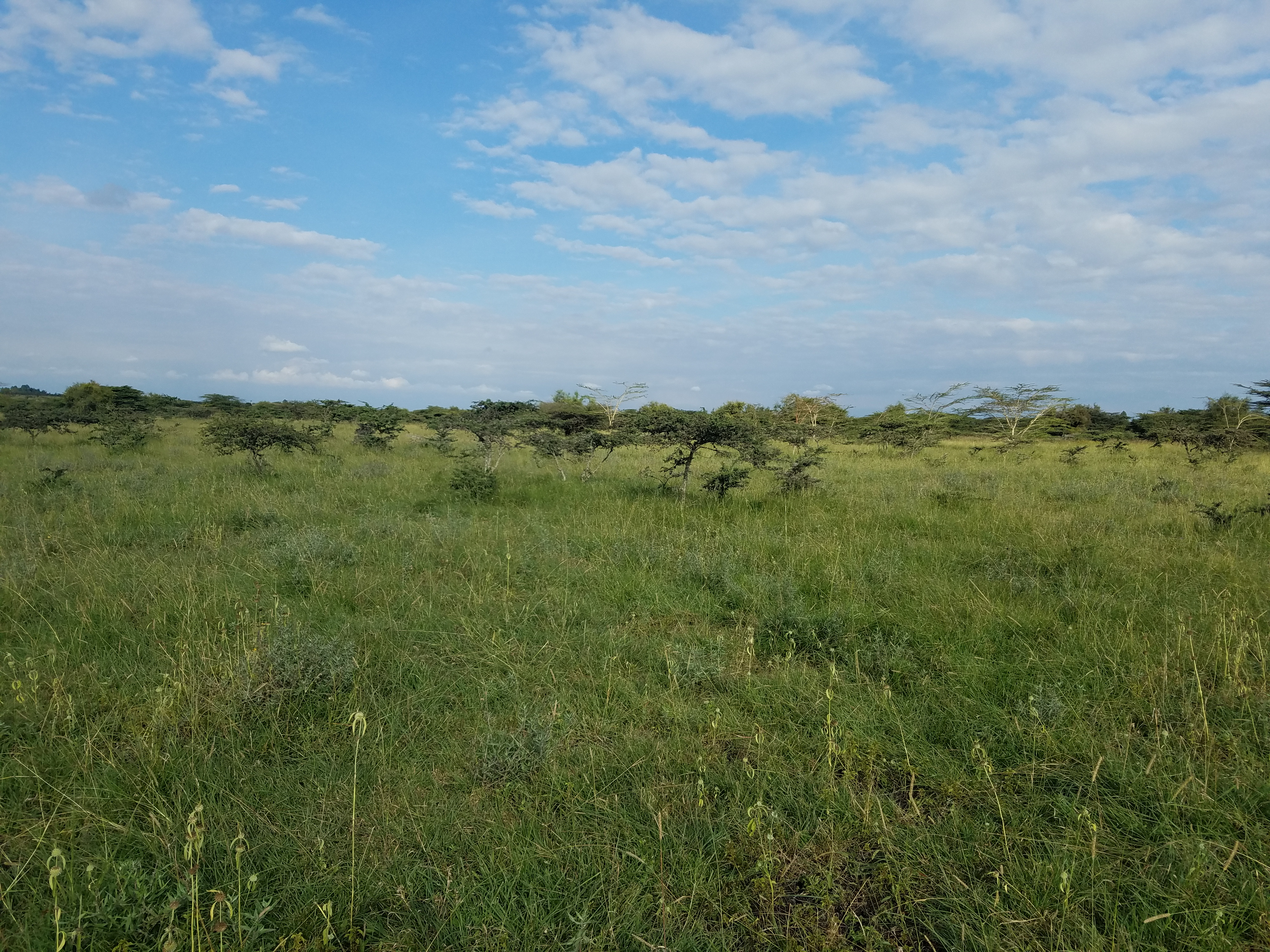 40 Acres Land for sale in Kitengela Kajiado