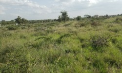 Plot for sale in Kitengela near East Africa University